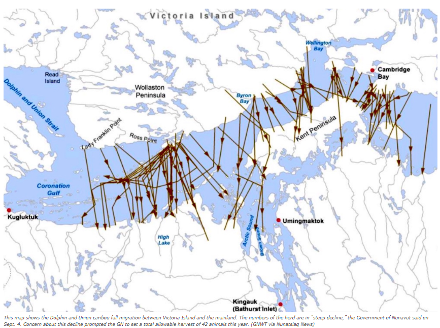 Canada49 Nunavut government limits hunting of Dolphin and Union caribou @arctic_today